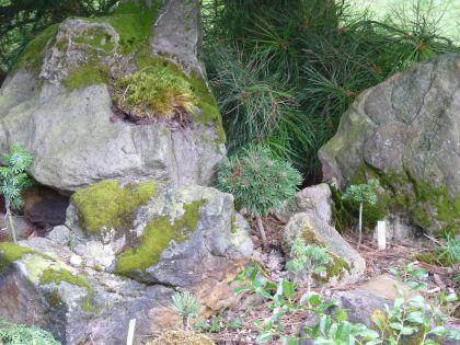 skalka z pískovcových kamenů osázená čarověníky